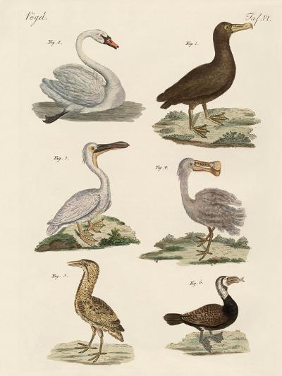 Strange Water Birds--Giclee Print