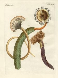 Strange Worms
