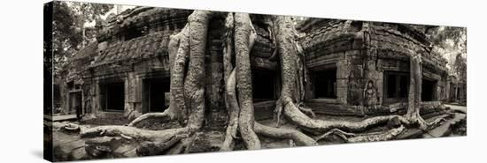 Strangler Fig Tree Roots Engulf Temple Ruins at Ta Prohm Temple Stretched  Canvas Print by Jim Ricardson | Art com