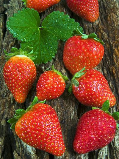 Strawberries (Fragaria Vesca) on a Tree Bark, Garden Strawberry-Nico Tondini-Photographic Print