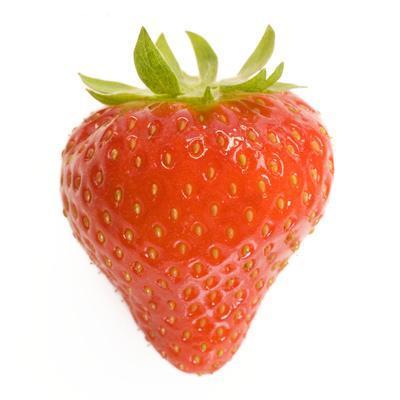 Strawberries Single in Studio--Photographic Print