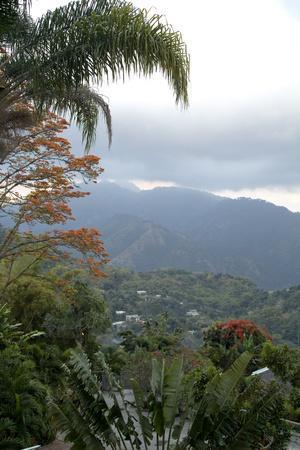 https://imgc.artprintimages.com/img/print/strawberry-hill-blue-mountains-jamaica_u-l-q12rt630.jpg?p=0
