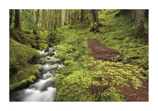 Stream And Forest Path-Donald Paulson-Giclee Print