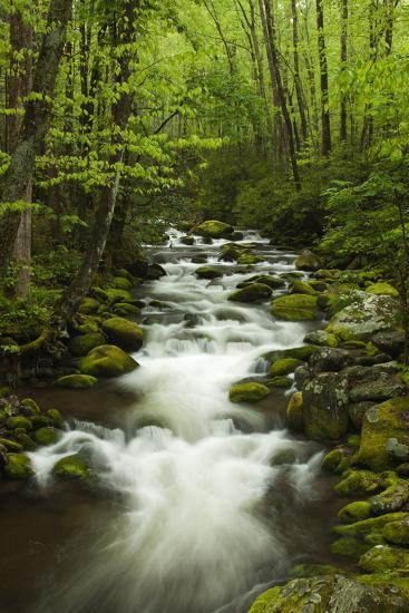Stream at Roaring Fork Trail in the Smokies, Great Smoky Mountains National Park, Tennessee, USA-Joanne Wells-Photographic Print