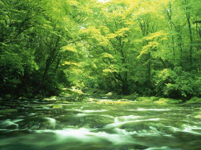 Stream Flowing Through a Forest--Photographic Print