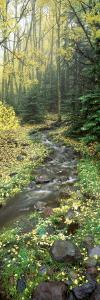 Stream Flowing through a Rainforest, Utah, USA
