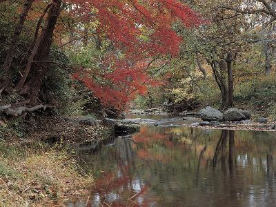 Stream Flowing Through an Autumnal Woods--Photographic Print
