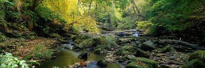 Stream Flowing Through Forest, Eller Beck, England, United Kingdom--Photographic Print
