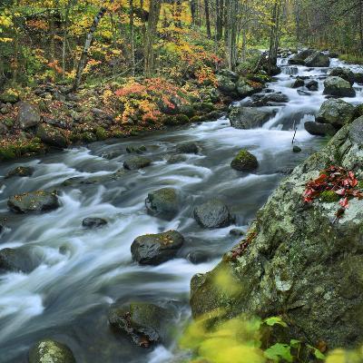 Stream Flowing Through Lake George Wild Forest, New York-Tim Fitzharris-Photographic Print