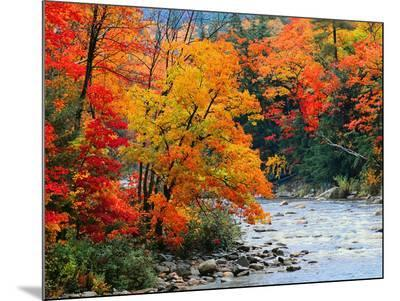 Stream in Autumn Woods--Mounted Print