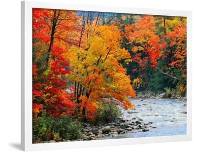 Stream in Autumn Woods--Framed Art Print