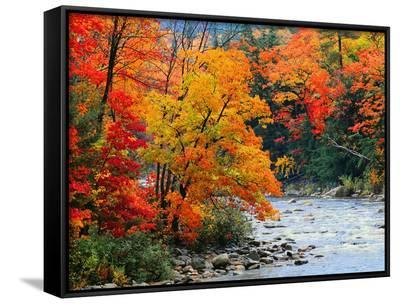 Stream in Autumn Woods--Framed Canvas Print