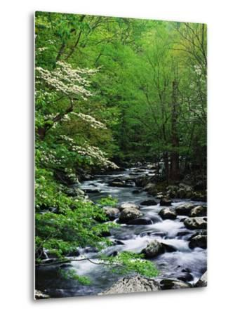 Stream in Lush Forest-Ron Watts-Metal Print