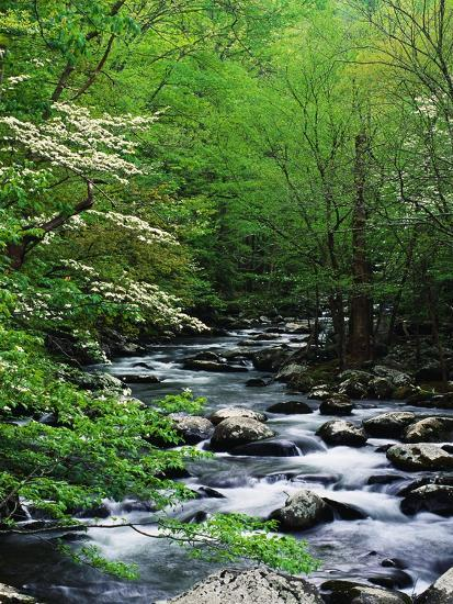 Stream in Lush Forest-Ron Watts-Photographic Print