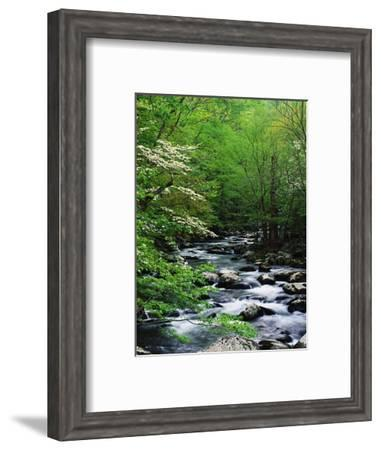 Stream in Lush Forest-Ron Watts-Framed Photographic Print