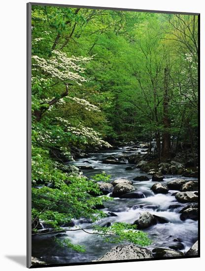 Stream in Lush Forest-Ron Watts-Mounted Photographic Print