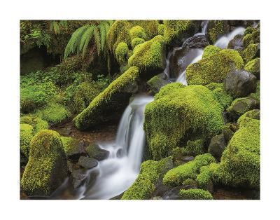 Stream in Olympic National Forest-Don Paulson-Giclee Print
