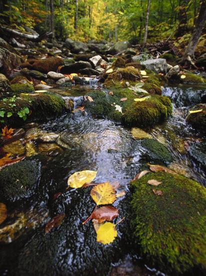 Stream in the Woods-Dan Gair-Photographic Print