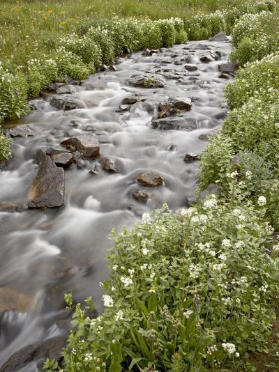Stream Lined with Heartleaved Bittercress, San Juan National Forest, Colorado, Usa-James Hager-Photographic Print