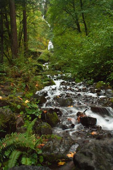 Stream Near Multnomah Falls in Oregon's Columbia River Gorge-Vickie Lewis-Photographic Print