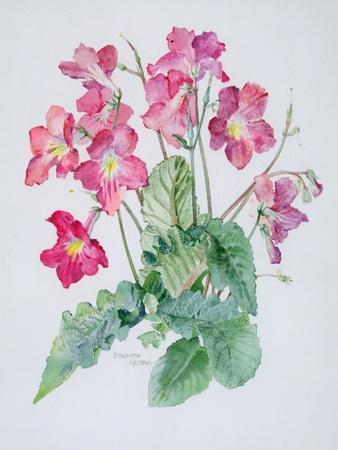 https://imgc.artprintimages.com/img/print/streptocarpus-c-1985_u-l-pjdyj90.jpg?p=0