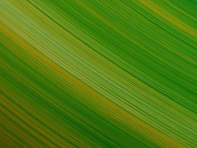Striated Green Background--Photographic Print