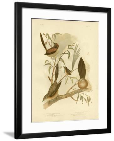 Striated Wren, 1891-Gracius Broinowski-Framed Giclee Print
