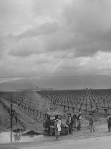 Strike at Digiorgio Fruit Farm in California's Central Valley by Af of L National Farm Labor Union