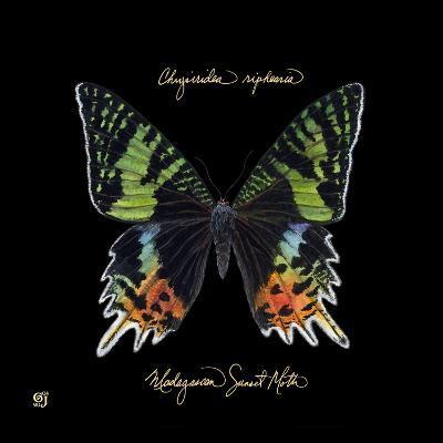 Striking Butterfly II-Ginny Joyner-Art Print