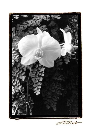 Striking Orchids I-Laura Denardo-Art Print