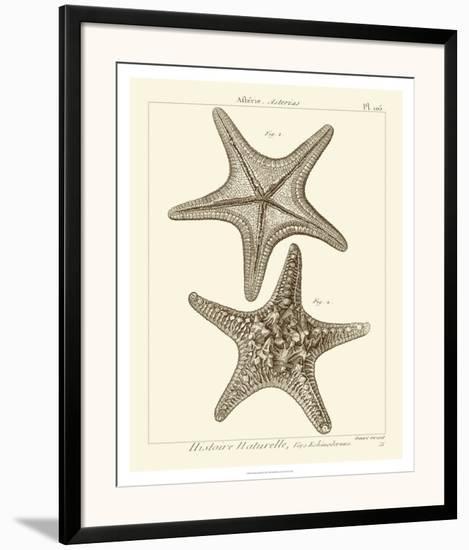 Striking Starfish II--Framed Art Print