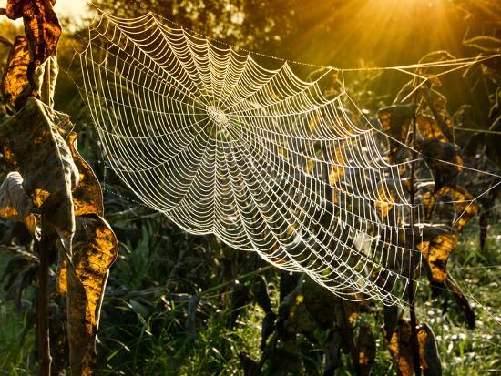 Strings of a Spider's Web in Back Light in Forest-Budimir Jevtic-Photographic Print