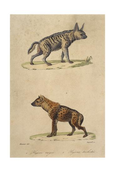 Striped and Spotted Hyena--Giclee Print