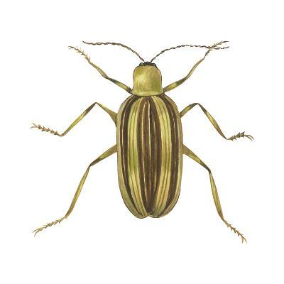 Striped Cucumber Beetle (Acalymma Vittata), Insects-Encyclopaedia Britannica-Art Print