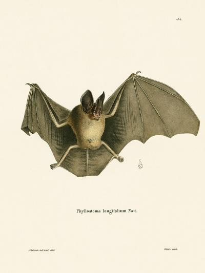 Striped Hairy-Nosed Bat--Giclee Print