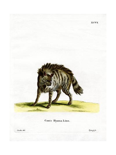 Striped Hyena--Giclee Print