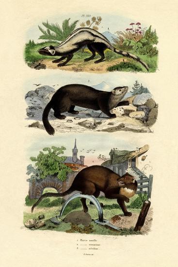 Striped Polecat, 1833-39--Giclee Print