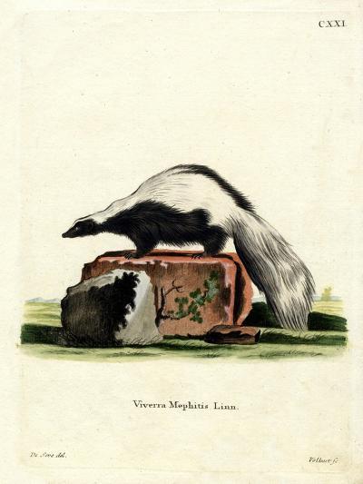 Striped Skunk--Giclee Print