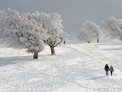 Strollers Passing Snow Covered Trees on the Mountain Schauinsland in the Black Forest , Germany--Photographic Print