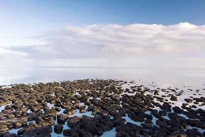Stromatolites In Australia-Bob Gibbons-Photographic Print