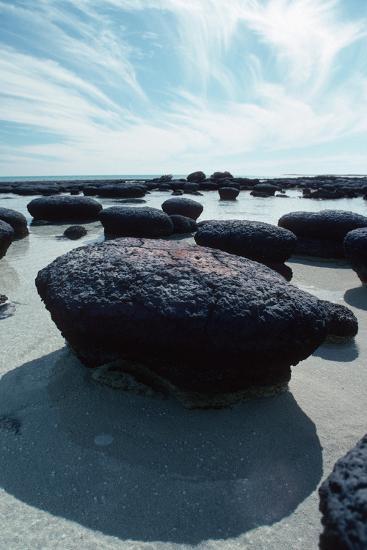 Stromatolites-Georgette Douwma-Photographic Print