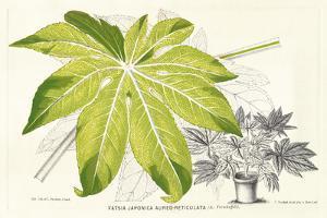 Fern Leaf Foliage I by Stroobant