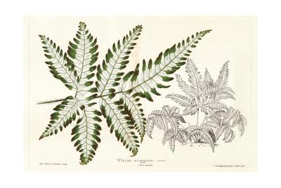 Fern Leaf Foliage II