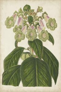 Foxglove Botanical by Stroobant