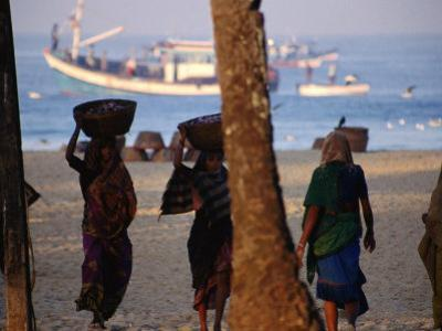Beach Laborere Haul Baskets of Fresh Marine Produce, Colva, Goa, India