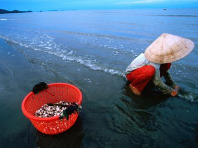 Woman Digs for Crustaceans in Sandy Lagoon on Vietnam's Southern Coast