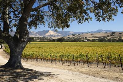 Autumnal Vineyards by Stuart Black