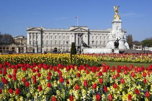 Buckingham Palace and Queen Victoria Monument with Tulips, London, England, United Kingdom, Europe by Stuart Black