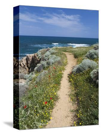Coastal Path with Spring Flowers, Near Chania, Chania Region, Crete, Greek Islands, Greece, Europe
