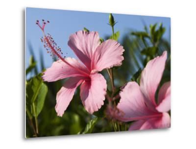 Hibiscus, Goa, India, Asia